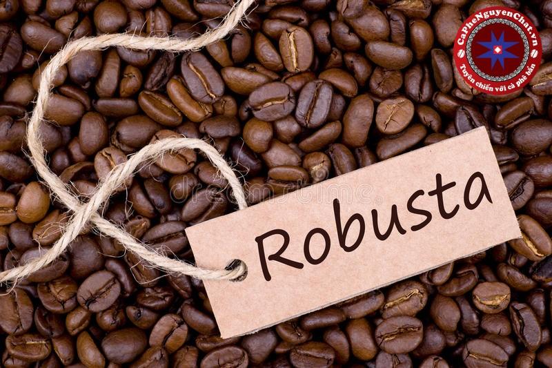 Cà phê Robusta -giống cà phê chủ lực ở Việt Nam . Vậy giống cà phê này có gì đặc biệt? Đặc tính và hương vị của loại cà phê này ra sao? Và điều gì đã biến nó trở thành linh hồn của cafe Việt? Hãy cùng tìm hiểu các thông tin sau đây để hiểu rõ hơn nhé.