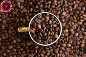 Cà phê Robusta có gì đặc biệt mà trở thành linh hồn cà phê Việt? Cùng theo chân Nguyen Chat Coffee tìm hiểu nhé!