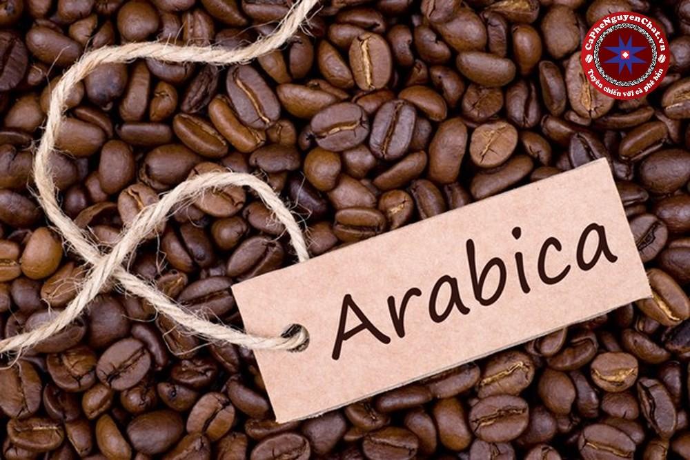 Các loại hạt cafe ngon nhất - Cà phê nguyên chất Hạt Arabica