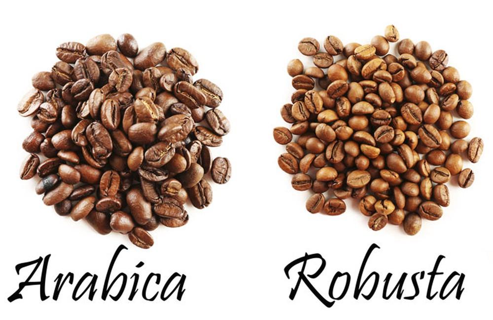 Hạt cafe loại nào được tiêu thụ nhiều